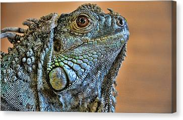 Iguana Canvas Print by Robert Knight