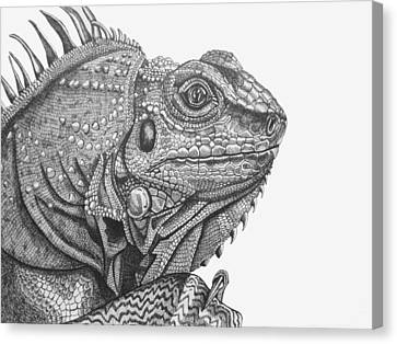 Iguana Canvas Print by Tracey Gurr BA Hons