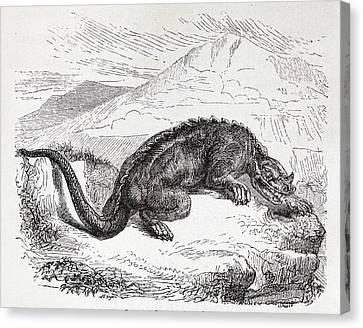Iguanodon Dinosaur Canvas Print