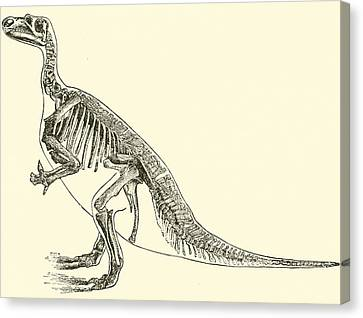 Dinosaur Canvas Print - Iguanodon by English School