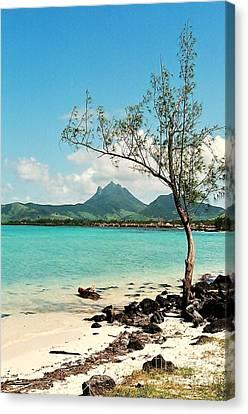 Ile Aux Cerfs Mauritius Canvas Print by David Gardener