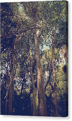 Wavy Canvas Print - I'll Float Up Into The Wavy Trees by Laurie Search