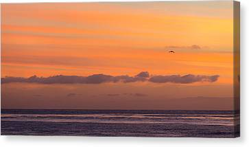 I'll Fly Away Canvas Print by Peter Tellone