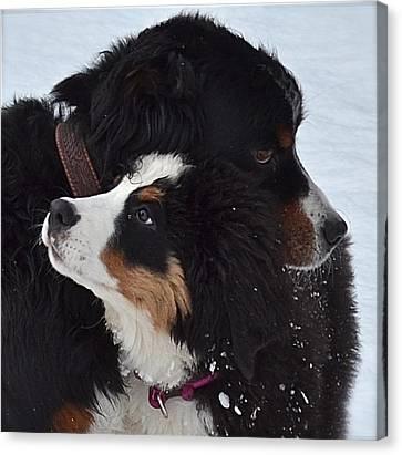 I'll Keep You Warm Canvas Print by Barbara Dudley