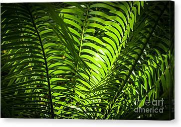 Illuminated Jungle Fern Canvas Print