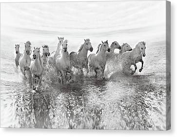 Illusion Of Power (13 Horse Power Though) Canvas Print