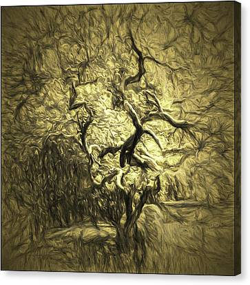 Jean_okeeffe Canvas Print - Illusion Tree by Jean OKeeffe Macro Abundance Art