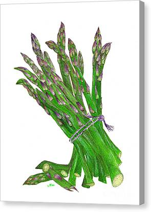 Canvas Print featuring the painting Illustration Of Asparagus by Nan Wright