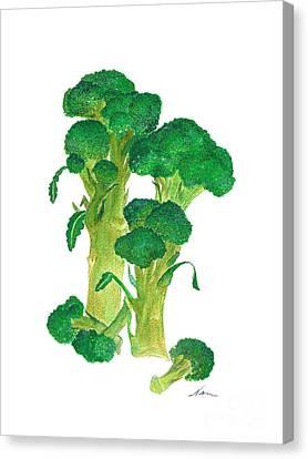 Illustration Of Broccoli Canvas Print by Nan Wright