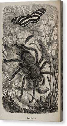 Illustration Of Tarantula And Butterfly Canvas Print by British Library