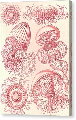 Illustration Shows Jellyfishes. Leptomedusae Canvas Print