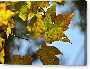 Ilovefall Canvas Print by JAMART Photography