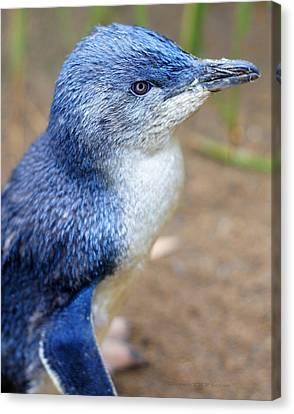 I'm Blue - Penguin Canvas Print by DerekTXFactor Creative