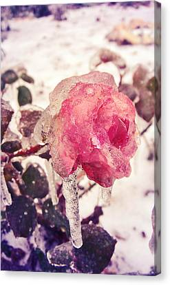 I'm Frozen.. Canvas Print by Victoria  Kostova
