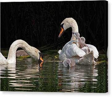 Nestled With Love Canvas Print - I'm Here Mommy by Gill Billington