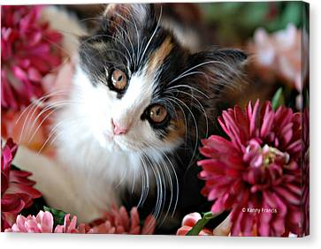 Canvas Print featuring the photograph I'm Just So Adorable by Kenny Francis