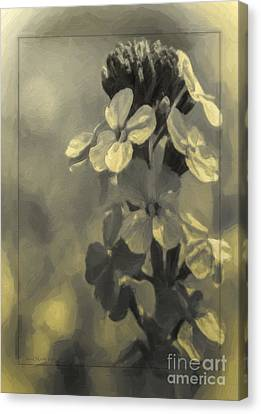 Summer Phlox Canvas Print by Jean OKeeffe Macro Abundance Art