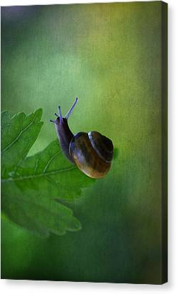 I'm Not So Fast Canvas Print by Annie Snel