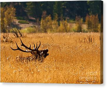 Canvas Print featuring the photograph I'm Over Here by Steven Reed