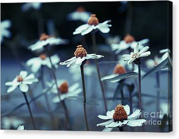 Imagine F03a Canvas Print by Variance Collections