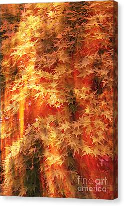 Img 75 Canvas Print