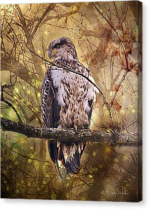 Canvas Print featuring the digital art Immature Bald Eagle In Solitude by J Larry Walker