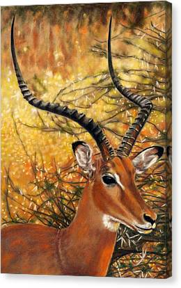 Impala At Sunset Canvas Print by Carol McCarty