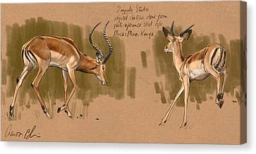 Canvas Print featuring the digital art Impala Studdies by Aaron Blaise