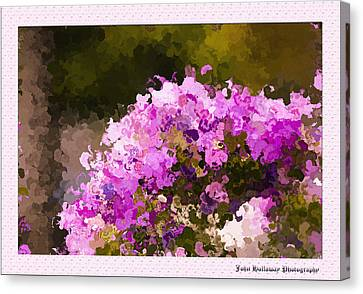 Impatiens In Oil Canvas Print by John Holloway