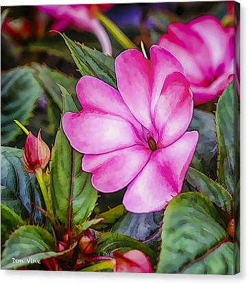 Impatiens Pink Canvas Print