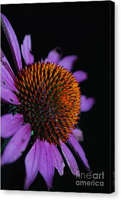 Imperfect Glory Canvas Print