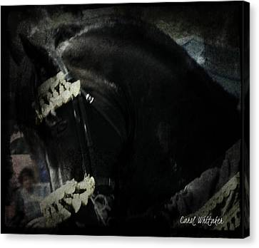 Imperial Friesian Canvas Print by Royal Grove Fine Art
