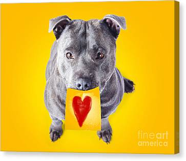 Doggy Cards Canvas Print - Imploring Staffie With A Sticky Note On His Mouth by Jorgo Photography - Wall Art Gallery
