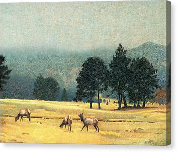 Impression Evergreen Colorado Canvas Print by Dan Miller