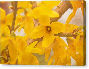 Canvas Print featuring the photograph Impressionist Forsythia by Jemmy Archer