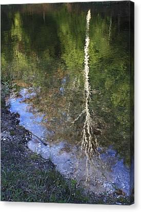 Impressionist Reflections Canvas Print by Patrice Zinck