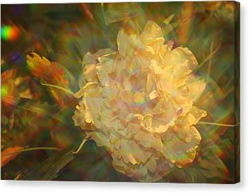 Canvas Print featuring the photograph Impressionistic Rose by Dora Sofia Caputo Photographic Art and Design