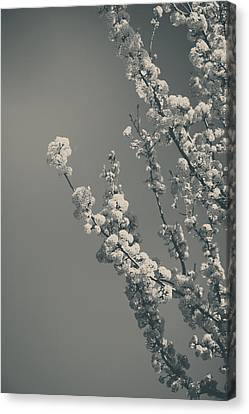 In A Beautiful World Canvas Print by Laurie Search