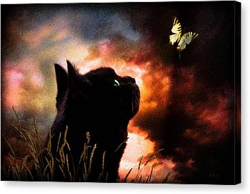 In A Cats Eye All Things Belong To Cats.  Canvas Print by Bob Orsillo
