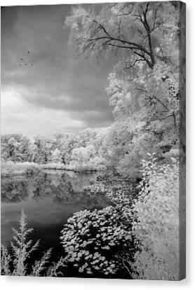 In A Dream Canvas Print by John Rivera