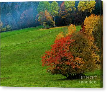 Canvas Print featuring the photograph In A Field Of Green by Charles Lupica
