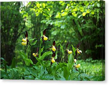 Canvas Print featuring the photograph In A Forest Glade by Kennerth and Birgitta Kullman