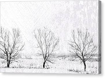 In A Line. Winter Trees Canvas Print by Jenny Rainbow