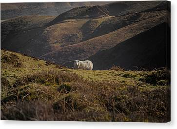 In A Rugged Landscape Canvas Print by Chris Fletcher