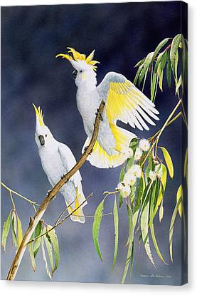 In A Shaft Of Sunlight - Sulphur-crested Cockatoos Canvas Print by Frances McMahon