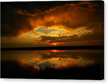 Cattail Canvas Print - In All His Glory by Jeff Swan