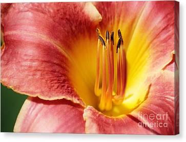 In Bloom Canvas Print by Barbara Bardzik
