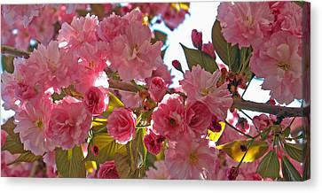 In Bloom Canvas Print by Barbara McDevitt