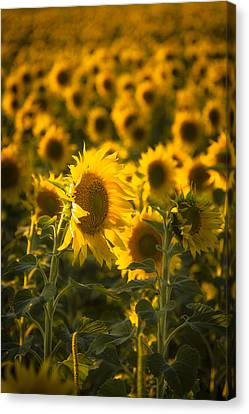 Canvas Print featuring the photograph In Bloom by Scott Bean