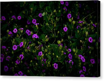 In Bloom Canvas Print by Swift Family